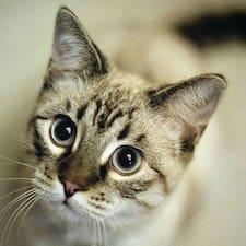 Meow User Profile