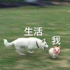 Perfil do utilizador de 文昌