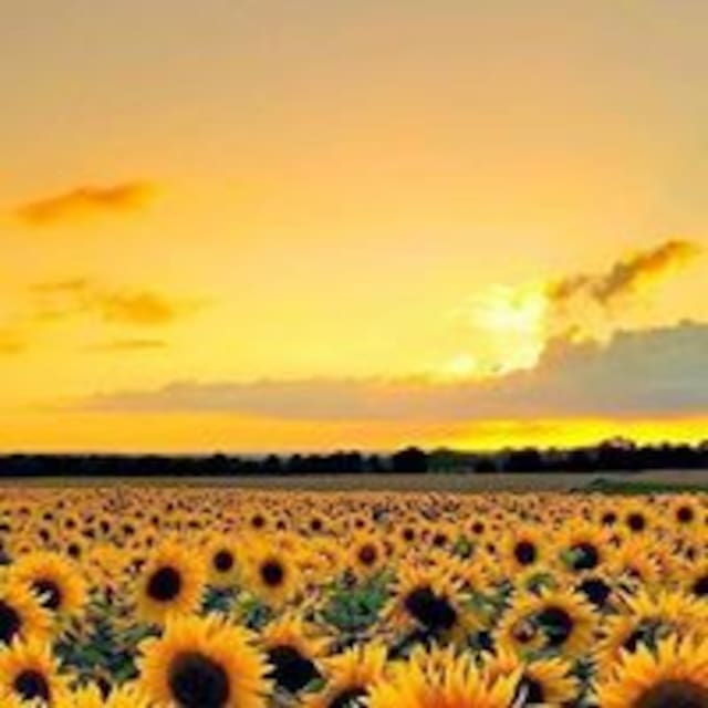 Путівник користувача SunflowerB&B