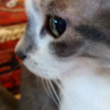 Cat User Profile