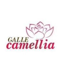 Galle User Profile