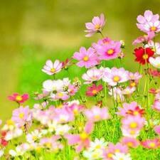 Profil Pengguna Flower