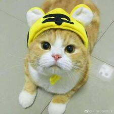 小伟 felhasználói profilja