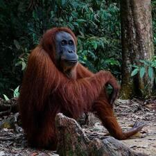 Profil korisnika Jungle