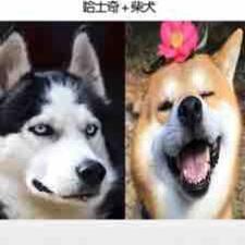 Perfil de usuario de Guifang