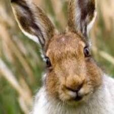 Profil Pengguna Hare