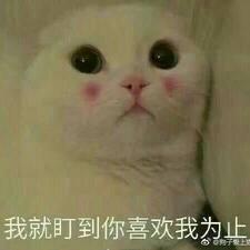 Profil Pengguna 仇琳