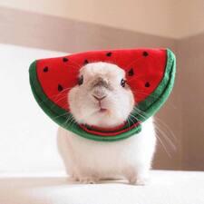 兔的用户个人资料