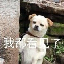 Profilo utente di 栩婕