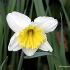 Profil utilisateur de Narcisse