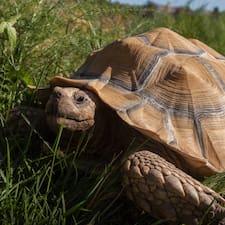 Профиль пользователя The Turtle House
