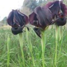 Profil korisnika Iris