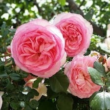 Nutzerprofil von BB Le Rose