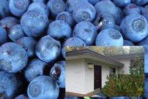 The Blueberry Inn Studio