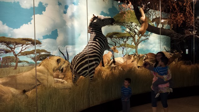 Photo of Houston Museum of Natural Science