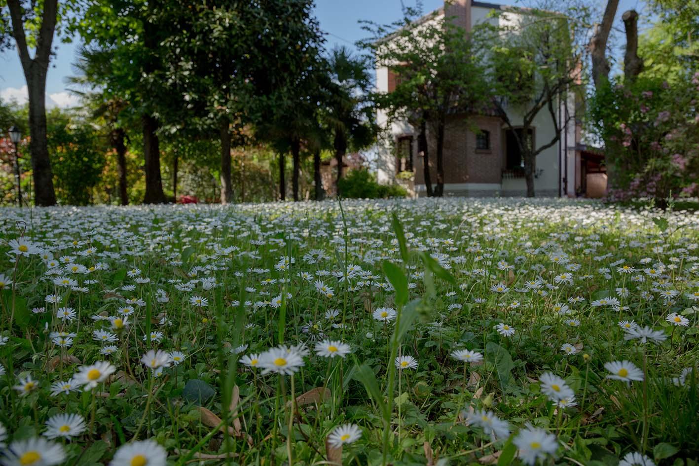 Palme Da Vaso Per Esterno vacation rentals, homes, experiences & places - airbnb