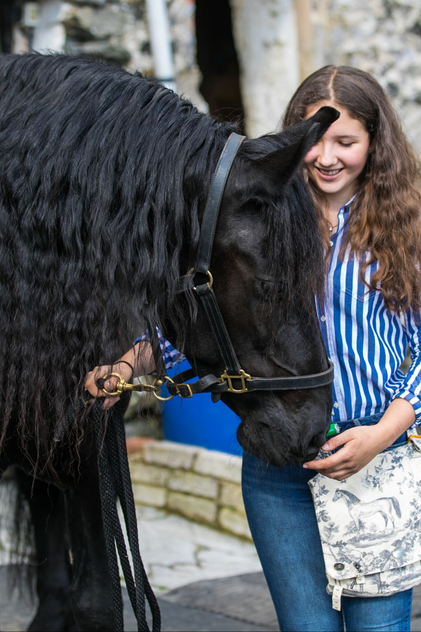 Meet Beautiful Black Friesian Horses Airbnb