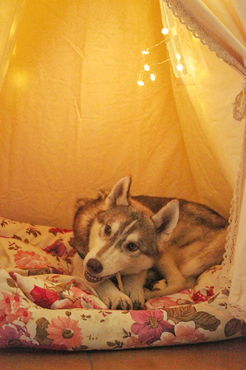 Dog Cafe With Huskies Coffee Among Dogs Airbnb It is a quiet ,restorative place with abundant bird life and wildlife it has an independent driveway and is private. dog cafe with huskies coffee among